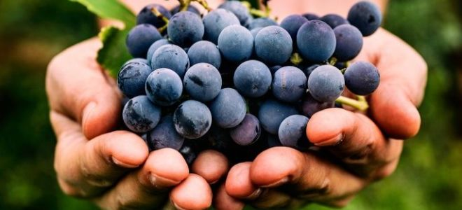 Пошаговый рецепт приготовления домашнего вина из ягод черники