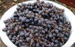 Как приготовить самогон из винограда — рецепт от браги до конечного продукта