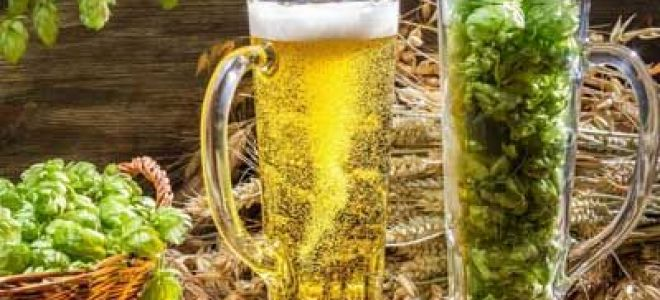 Что такое хмелепродукты в пиве
