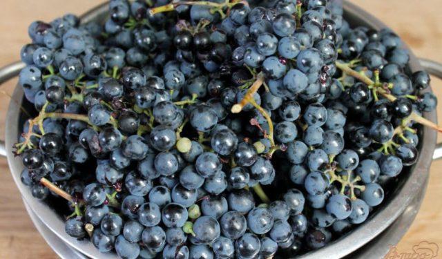тёмный виноград